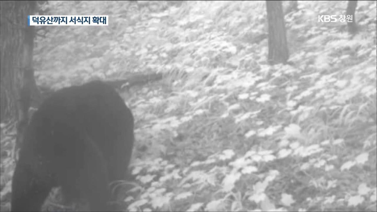 '멸종 위기' 반달곰, 덕유산 인근까지 서식지 확대