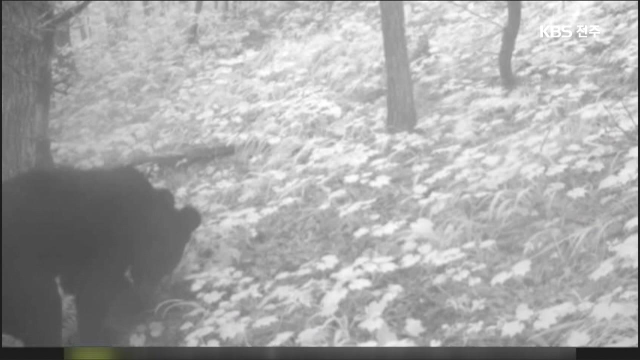 무주서 반달가슴곰 첫 포착…
