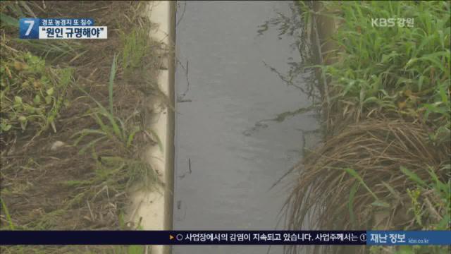 강릉 경포 농경지 3년 연속 침수 피해…대책 시급