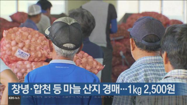 [간추린 경남] 창녕·합천 등 마늘 산지 경매…1㎏ 2,500원