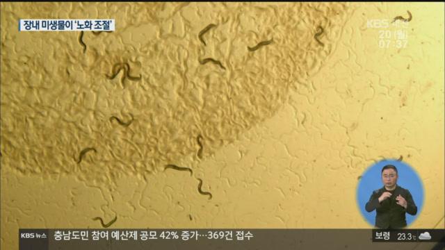 '장내 미생물'이 노화 조절한다!