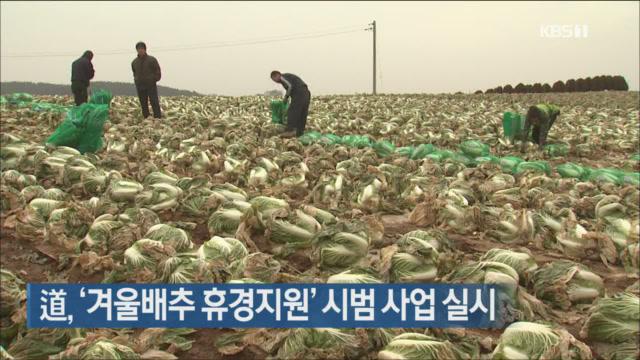 道, '겨울배추 휴경지원' 시범 사업 실시